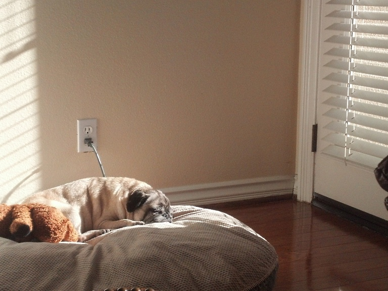 Napping in Sunshine