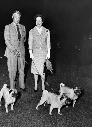 Duke and Duchess of Windsor with pugs